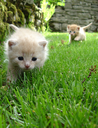 cute kittens playing on grass lawn cat pic