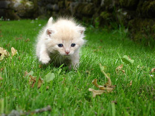 cute kitten running on grass lawn cat pic