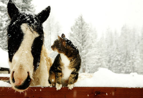 beautiful horse cute kitty cat pic