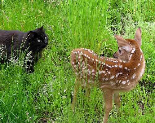 cute black cat meets deer kitty pic