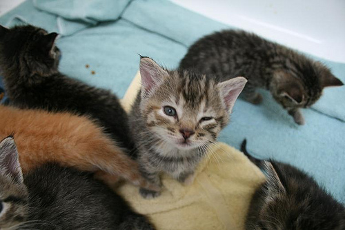cute rescued kittens cat pic