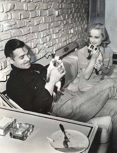Clark Gable and cat