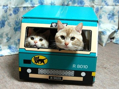 cute kittens hiding in box cat pic