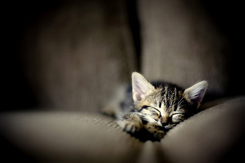 cute kitten sleeping nap time cat pic