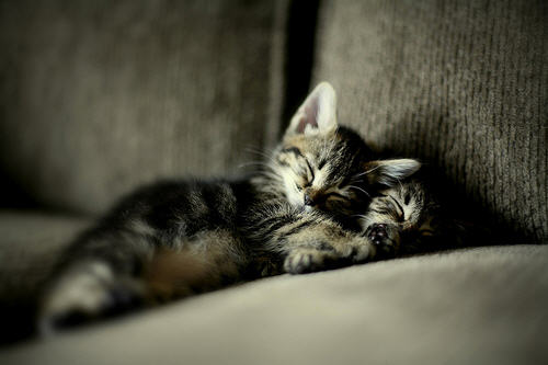 cute kitten sleeping cat pic