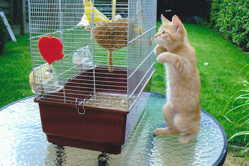 cute kitten playing with bird silly funny cat pic