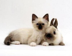 bunny cute kitten look alike pic