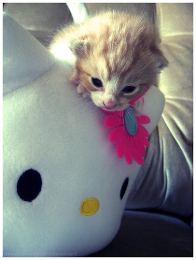 cute kitten hello kitty pic