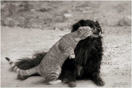 cute cat kisses dog pic