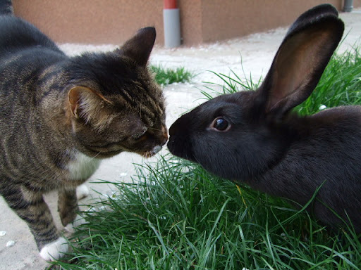 cute kitten kissing bunny pic