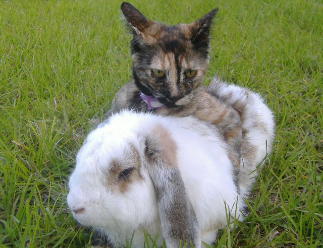 cute tortie cat hugs bunny easter pic
