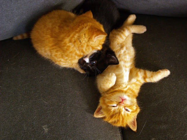 cute kittens fighting