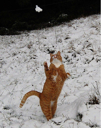 cute ginger cat catching snowballs
