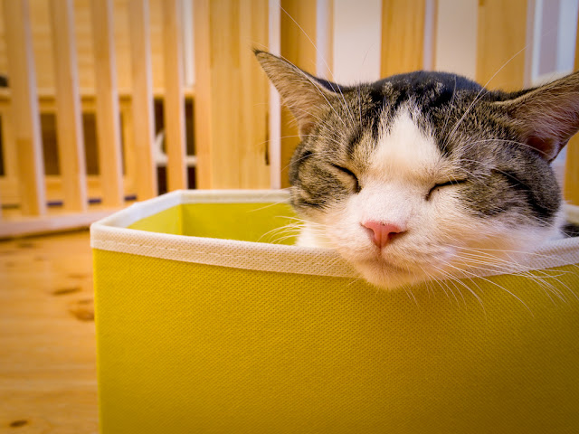 cute cat sleeping in a bag