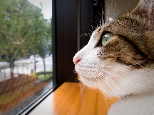 cute cat looking out the window