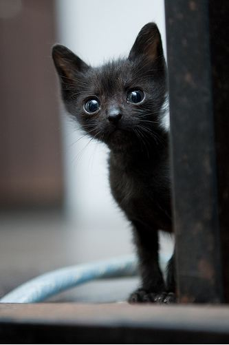 cute black kitten big eyes