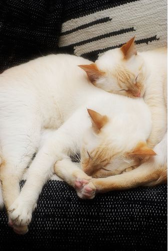 cute cats napping together