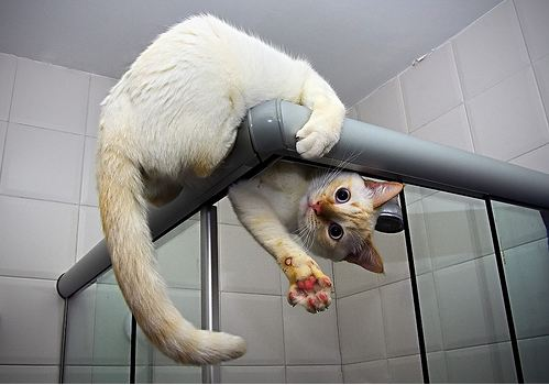 cute cat standing on shower stall