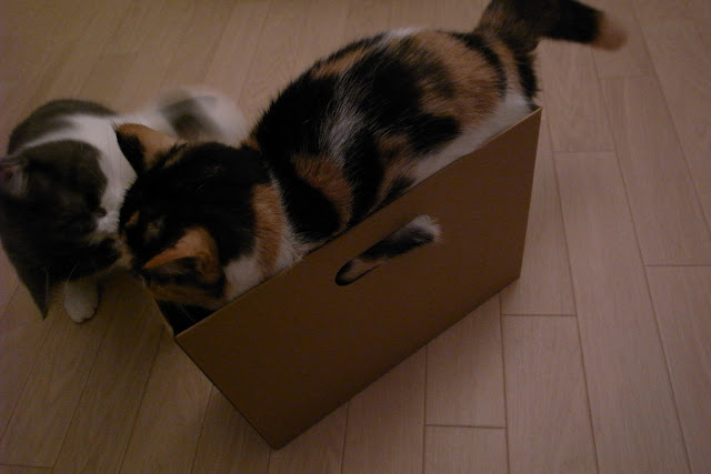 cute cats checking out the box