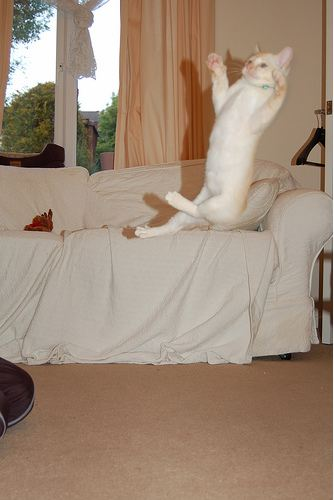 cute cat jumping