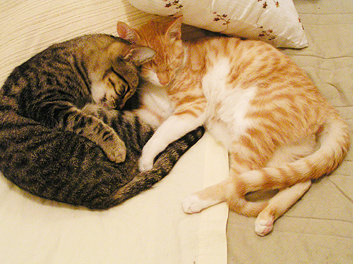 cute cats sleeping together