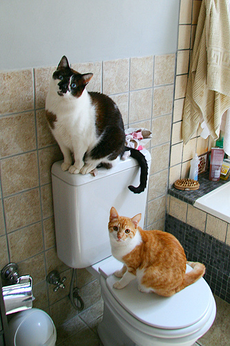 cute cats in the bathroom