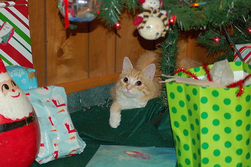 cute ginger cat's favorite hiding spot christmas tree