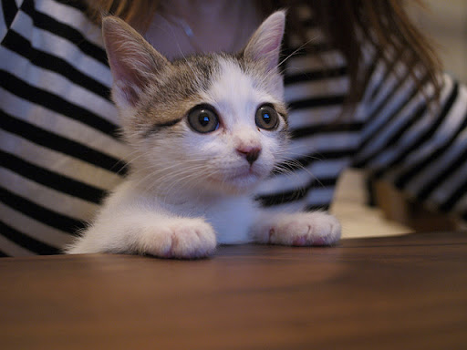 cute kitten watching tv