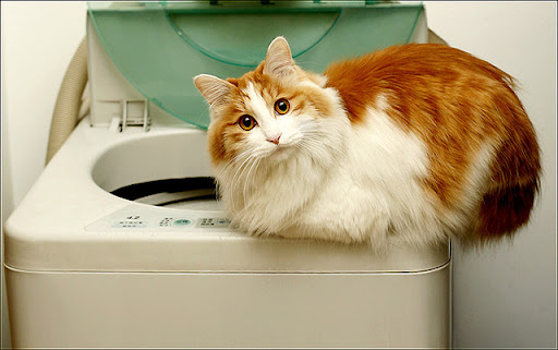cute ginger and white cat sitting on washer