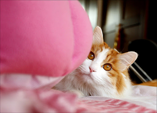 cute cat hiding behind kitty bed