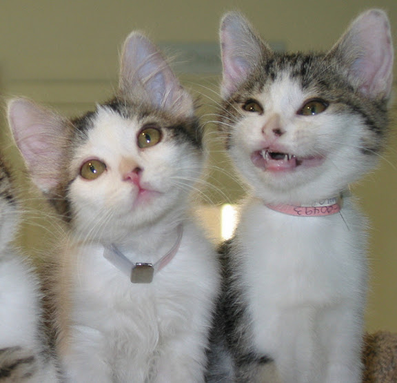 cute foster kittens smiling