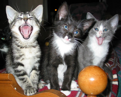 cute kittens laughing