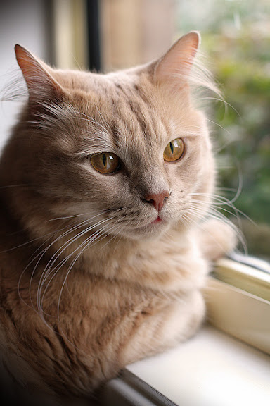 cute ginger cat by the window