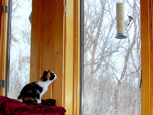 cute kitten watching woodpecker