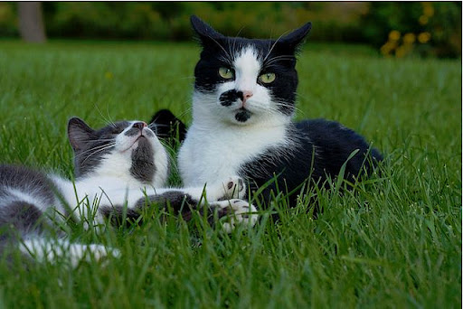 cute blind kitten and his kitty buddy hanging out in gardens