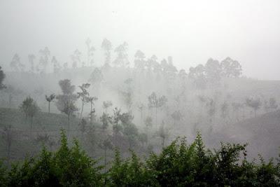Tea plantation in Sri Lanka in the fog
