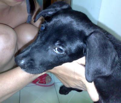 [Dog]小黑狗的主人,請和我聯絡!