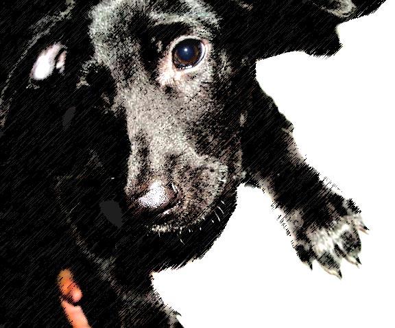 [串連]讓動物也有遇到好主人的機會!請支持修正不合時宜的動保法!