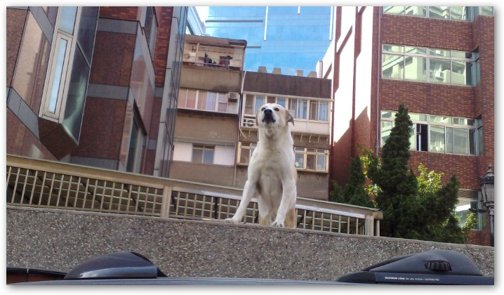 [Dog]街頭狗仔:站在高牆的狗狗!