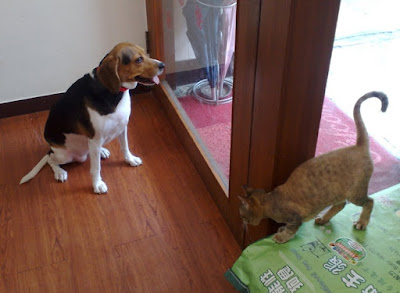 [Dog]紅豆與小四!