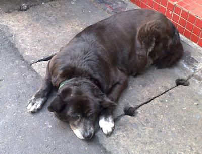 [Dog]光華吃喝一條街的老黑狗!