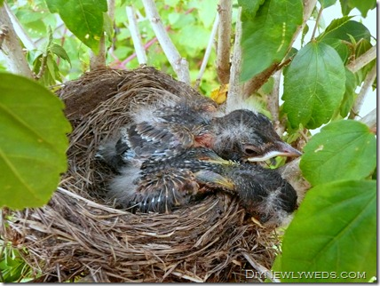 baby_robins_sleeping