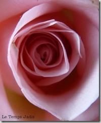 aankopen en rozen 014