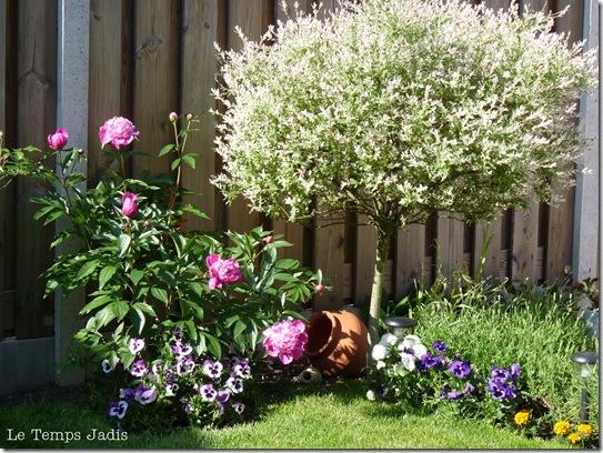 4 juni 2010 068 tuin