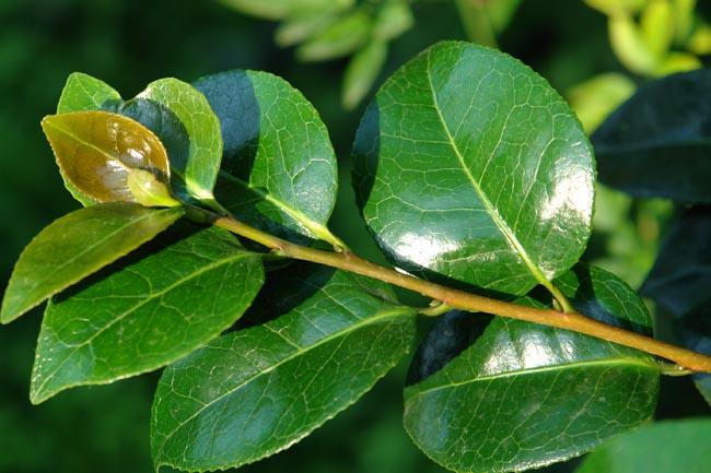 nomes de plantas image