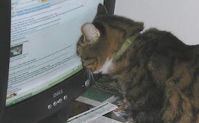 cat_image-2011-03-12-15-31.jpg