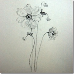 Intro to Botanical Illustration - 4