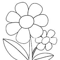 primavera-margarita.jpg
