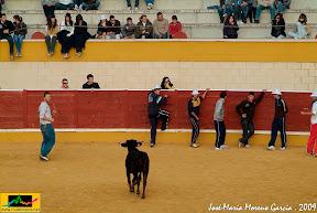 SUELTA DE VAQUILLAS >84 FOTOS Y 2 VIDEOS<