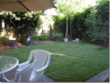 070721_backyard1